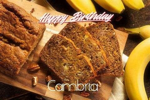 Happy Birthday Cambria Cake Image