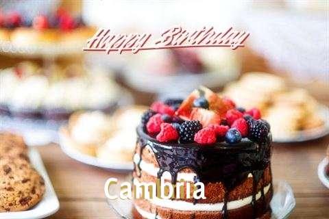Wish Cambria