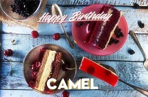 Camel Birthday Celebration