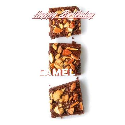 Happy Birthday Cake for Camel