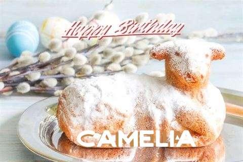 Happy Birthday to You Camelia
