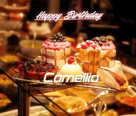 Camellia Birthday Celebration
