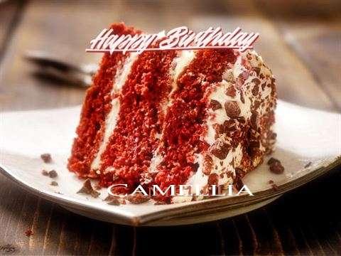 Happy Birthday to You Camellia