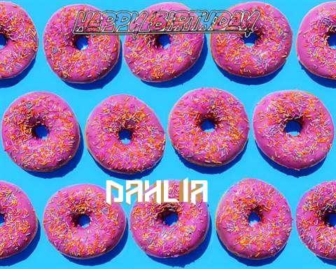 Wish Dahlia