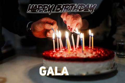 Gala Cakes