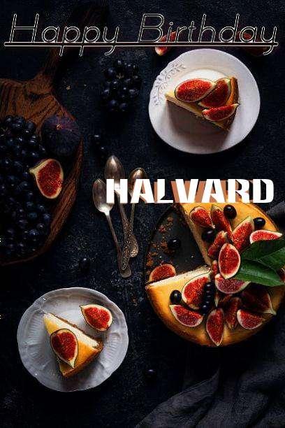Halvard Cakes