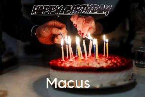 Macus Cakes