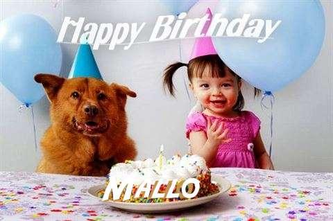 Mallo Cakes