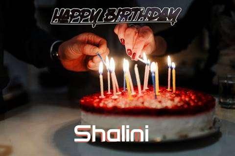 Shalini Cakes