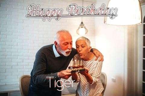Tiger Birthday Celebration